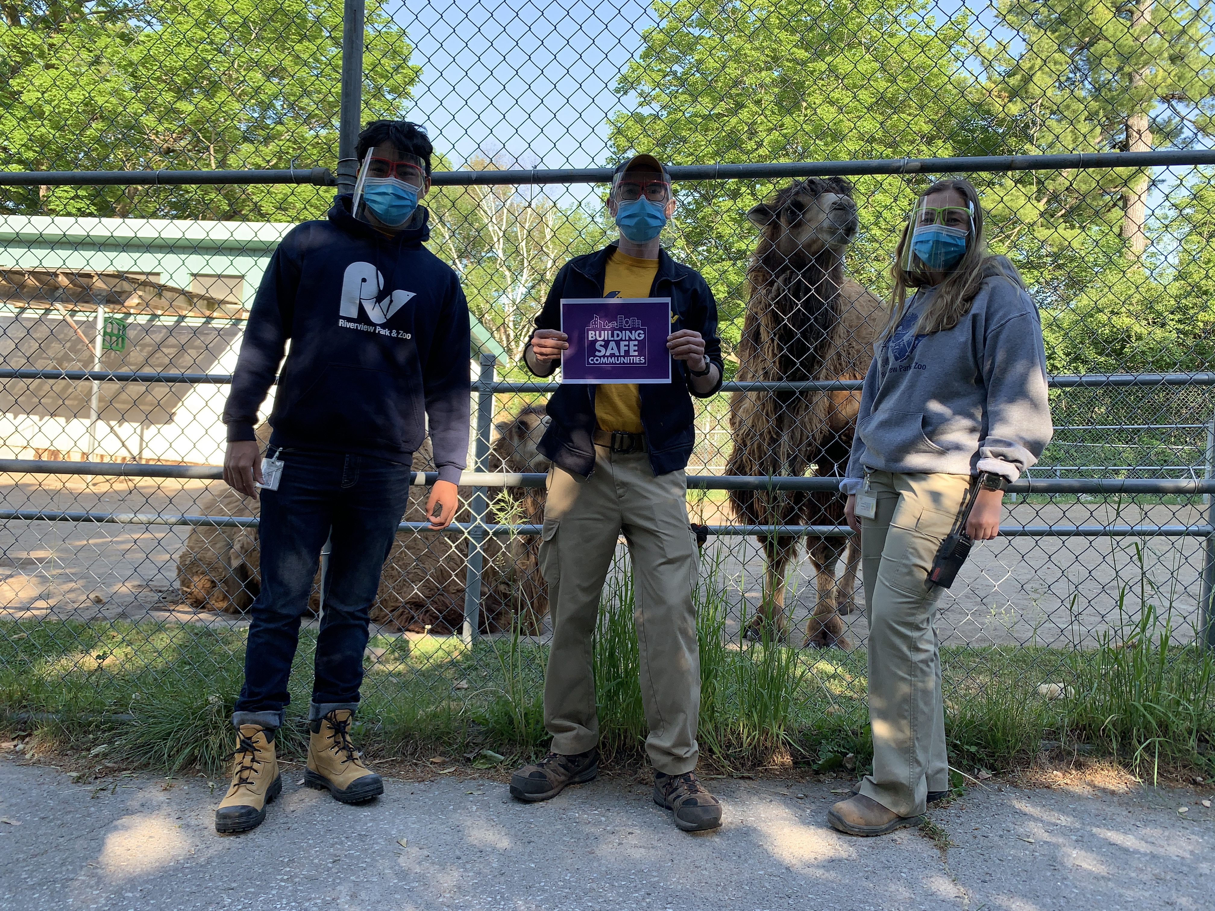 Three Staff members in PPE sheild and masks next to the Camel Exhibit