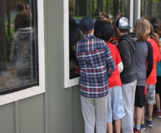 kids looking into a exhibit window