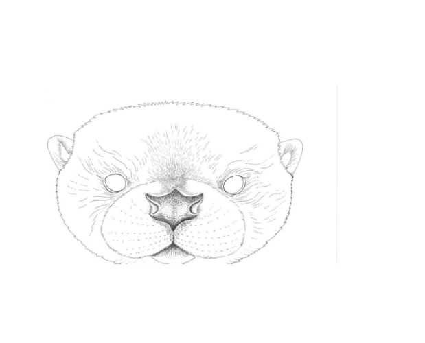outline of river otter face to make your own mask at home.